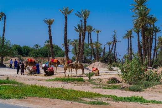 Marruecos 07 D23 -012