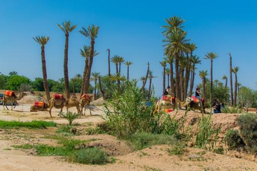 Marruecos 07 D23 -056